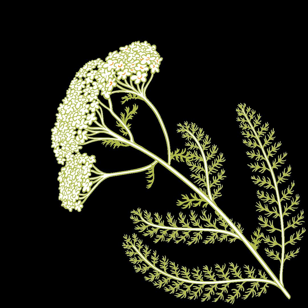pflanze pusteblume Heilpraktikerin Cornelia Gramoll in Hohen Neuendorf - Grafik Startseite
